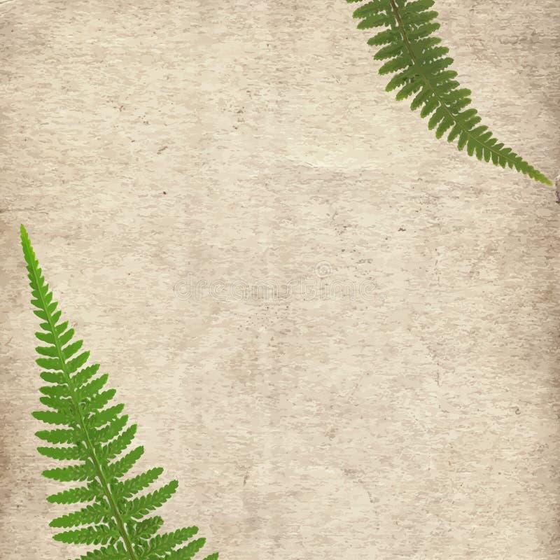 Oude uitstekende document textuurachtergrond met groene droge varenbladeren stock fotografie