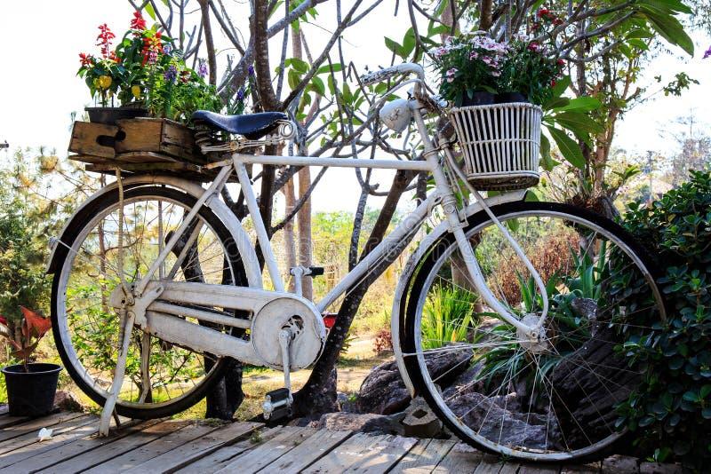 Oude uitstekende fiets of fiets met kleurrijke bloempot royalty-vrije stock foto's