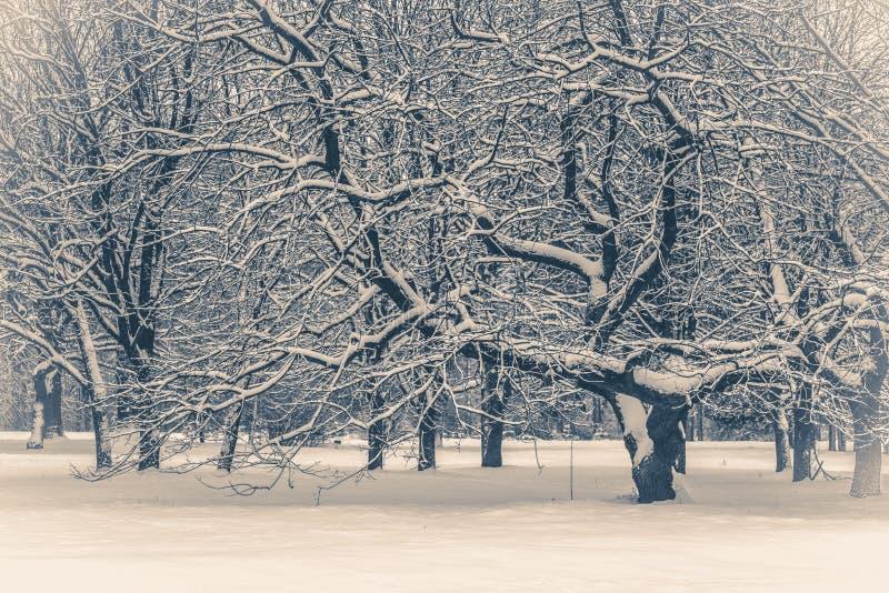 Oude uitstekende foto De fantastische boom van de meningskerstmis van het fairytale magische landschap stock afbeelding