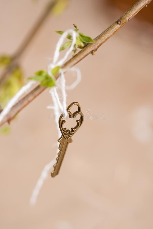 Oude uitstekende sleutel op een boomtak, groene jonge bladeren de lente en de zomervisie royalty-vrije stock afbeelding