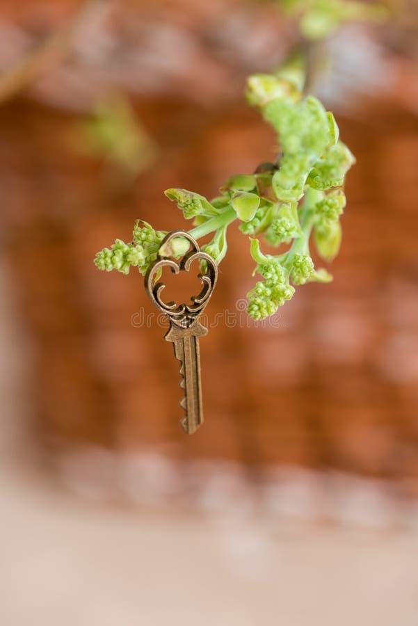 Oude uitstekende sleutel op een boomtak, groene jonge bladeren de lente en de zomervisie royalty-vrije stock foto's