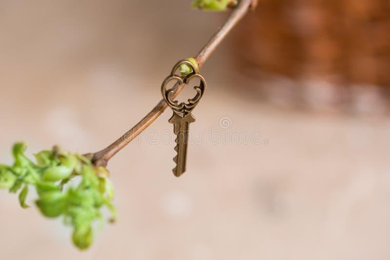 Oude uitstekende sleutel op een boomtak, groene jonge bladeren de lente en de zomervisie stock foto