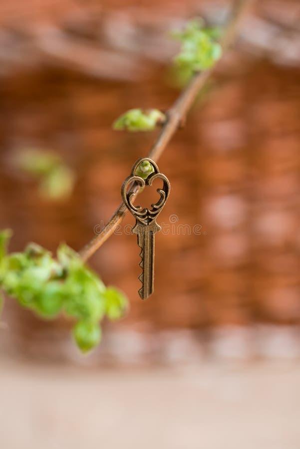 Oude uitstekende sleutel op een boomtak, groene jonge bladeren de lente en de zomervisie stock foto's