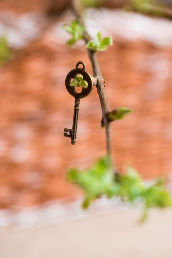 Oude uitstekende sleutel op een boomtak, groene jonge bladeren de lente en de zomervisie stock fotografie