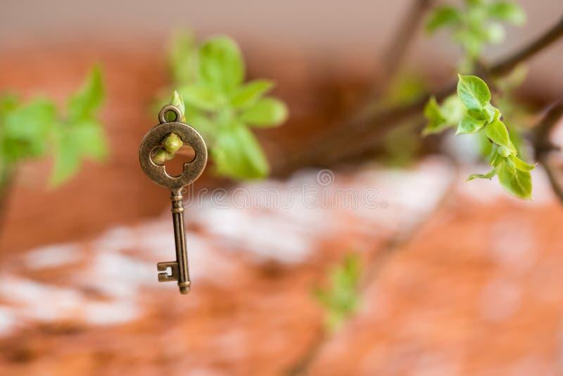 Oude uitstekende sleutel op een boomtak, groene jonge bladeren de lente en de zomervisie stock afbeelding