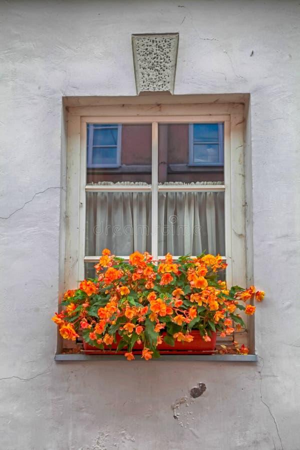 Oude venster en bloemdoos stock afbeelding