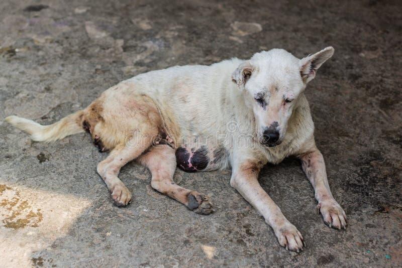 Oude Verdwaalde hond royalty-vrije stock fotografie