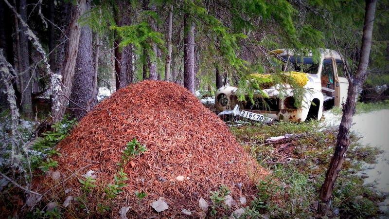 Oude verlaten autowrak en termiethoop in het Zweedse bos stock afbeeldingen