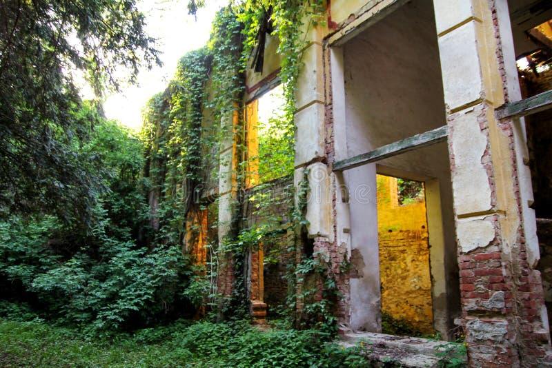 Oude verlaten concrete van nature overvallen fabrieksstructuur/de Roestige oude ruïneuze en verlaten bouw van fabriek royalty-vrije stock afbeeldingen