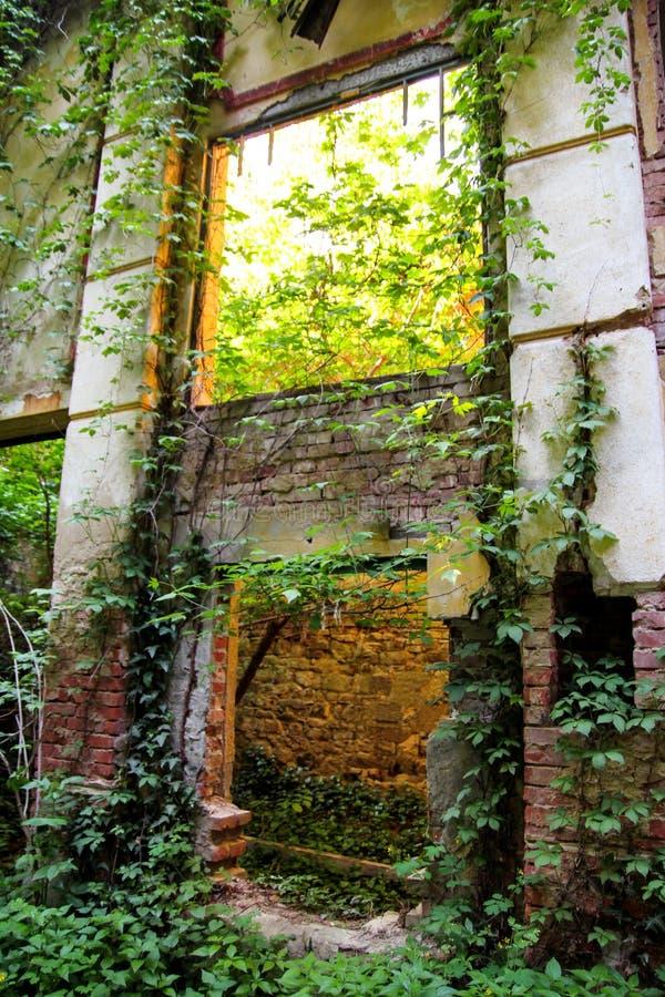 Oude verlaten concrete van nature overvallen fabrieksstructuur/de Roestige oude ruïneuze en verlaten bouw van fabriek stock fotografie