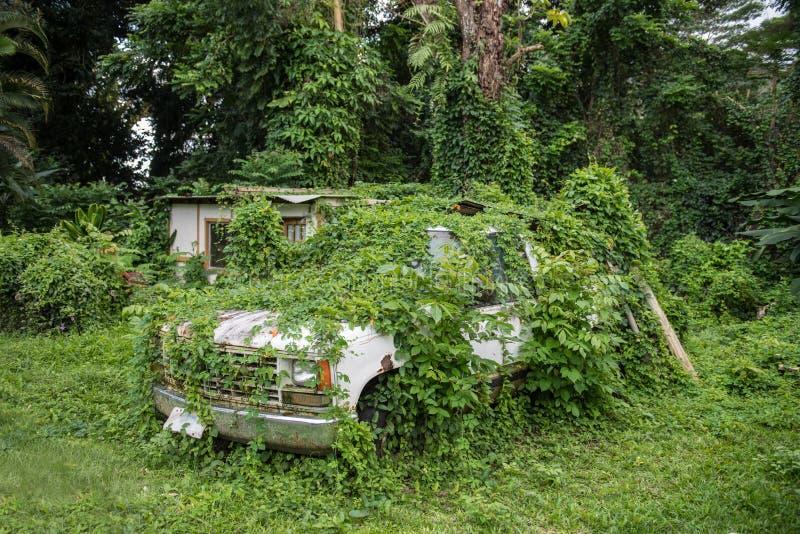 Oude verlaten roestige auto in groen tropisch wildernisbos stock foto