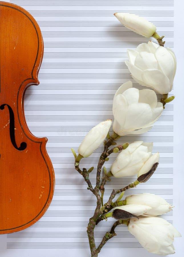 Oude viool en het tot bloei komen magnoliabrances op het witte notadocument Hoogste mening, close-up royalty-vrije stock fotografie
