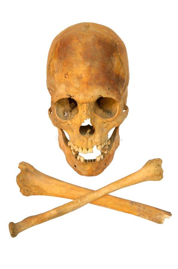 Oude voorhistorische menselijke geïsoleerdee schedel stock foto's