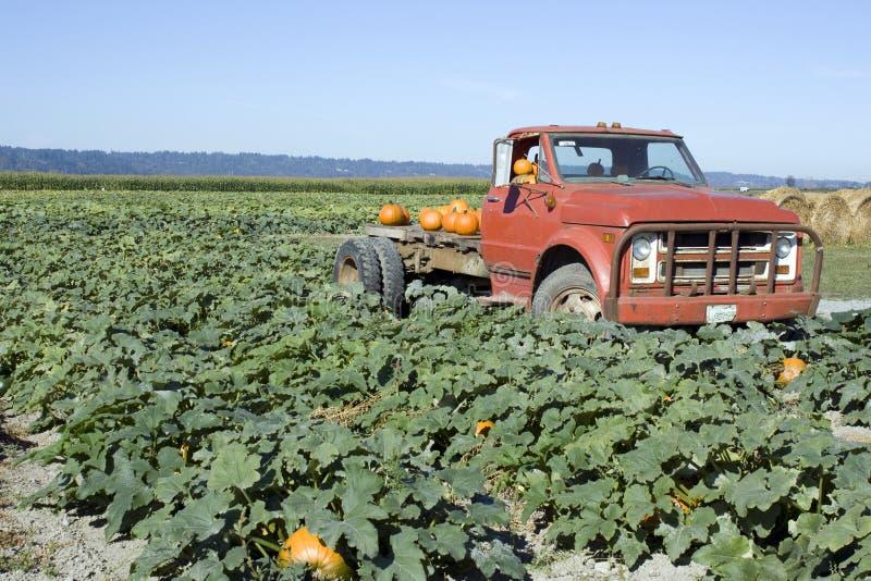 Oude vrachtwagen bij pompoenlandbouwbedrijf stock afbeeldingen