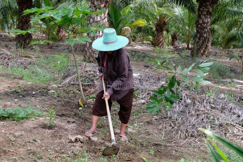 Oude vrouw die in de tuin werkt stock afbeelding