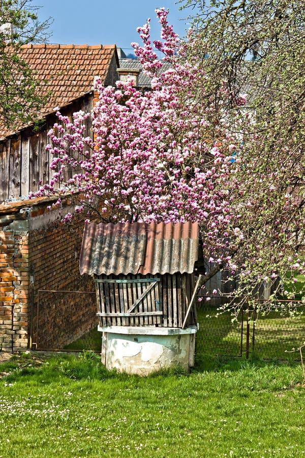 Oude waterput onder de boom van de bloesemmagnolia royalty-vrije stock fotografie