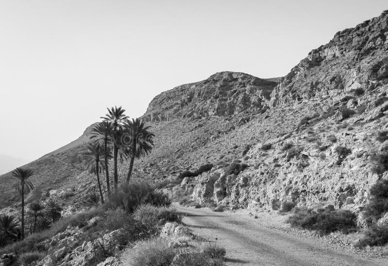Oude weg en palmen op droge rotsachtige helling in de woestijn begin de dag in zwart-wit stock afbeelding