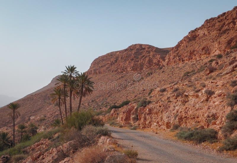 Oude weg met palmen op droge rotsachtige helling in de woestijn van de Sahara begin de dag in zonsonderganglicht royalty-vrije stock foto