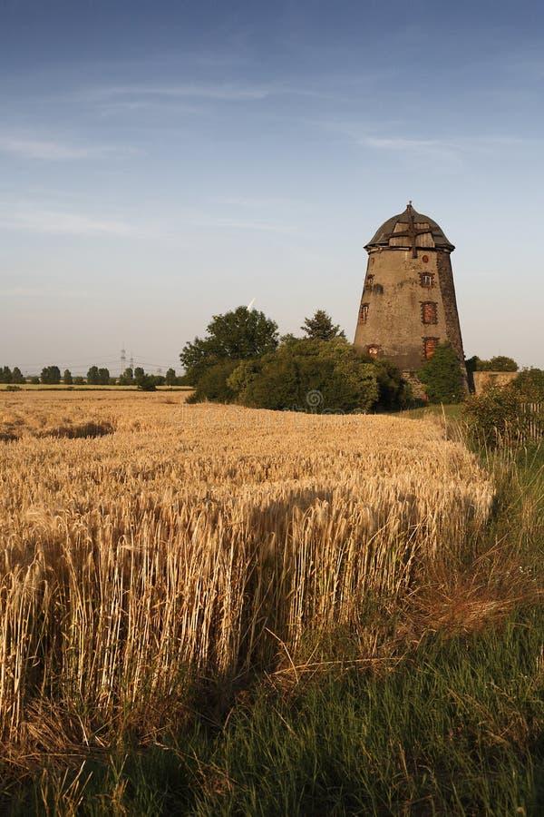 Download Oude Windmolen In De Herfstzon Stock Afbeelding - Afbeelding bestaande uit graangewassen, geschiedenis: 39101523