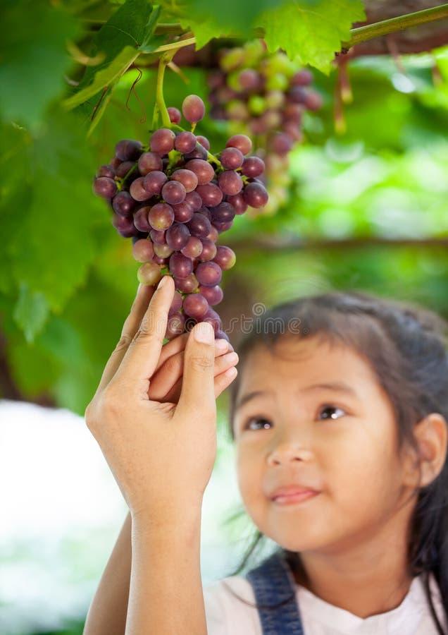 Ouder en kindhand het controleren en het oogsten bos van rode druif royalty-vrije stock afbeelding