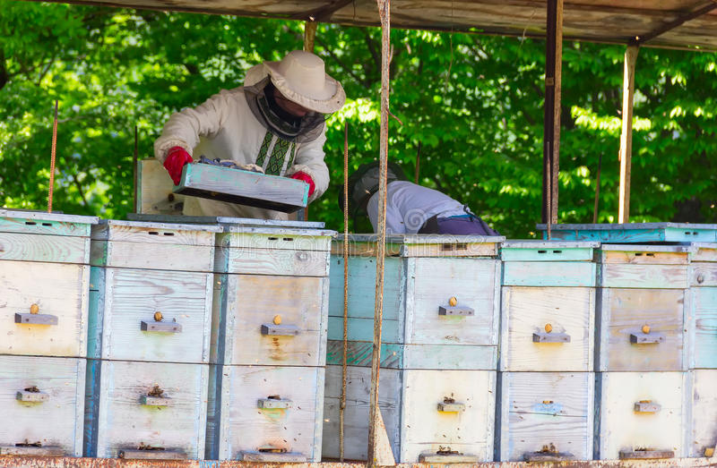 Oudere beekeepers stock foto's