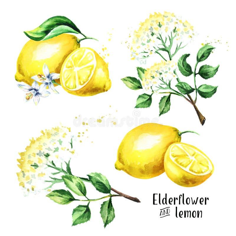 Oudere bloem en citroenreeks Iingredients voor het maken van elderflower cocktail Waterverfhand getrokken die illustratie, op wit royalty-vrije illustratie