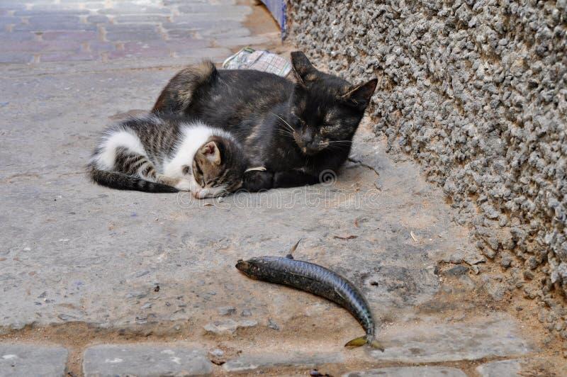 Oudere en jongere kat op de straat royalty-vrije stock foto