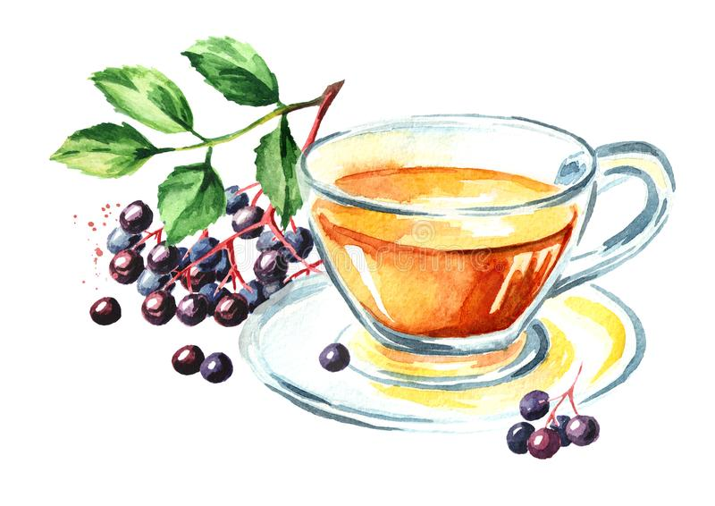 Oudere thee Waterverfhand getrokken die illustratie, op witte achtergrond wordt geïsoleerd stock illustratie
