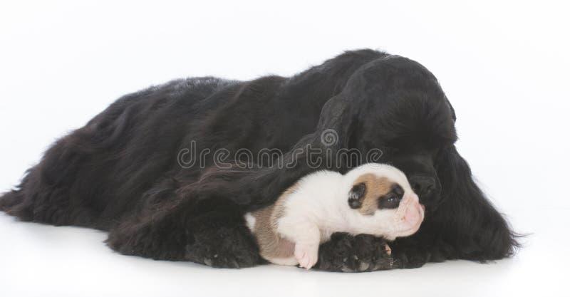 ouderloos puppy die door leenmoeder worden gefokt stock afbeelding