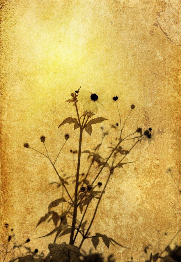 Ouderwetse bloem royalty-vrije stock foto's