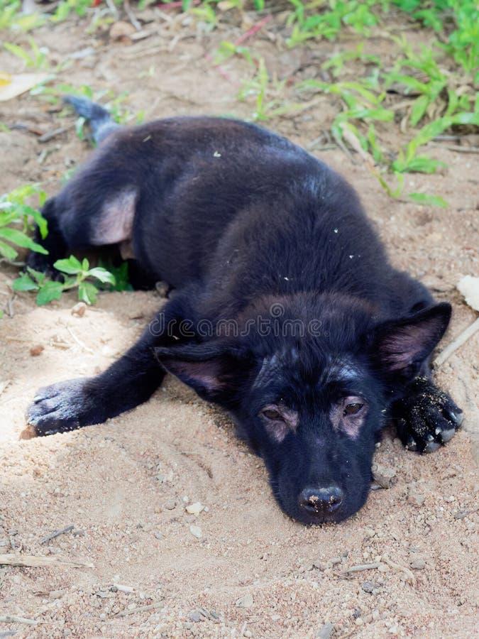 Oung schwärzen streunenden Hund oder Welpen mit der Leprashow, die um seine Augen und Beine liegen aus den Grund unbehaart ist lizenzfreie stockfotos