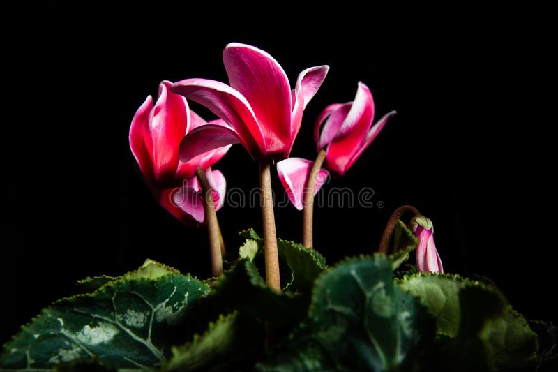 Ouquet of red flowers glowing on black. stock photo