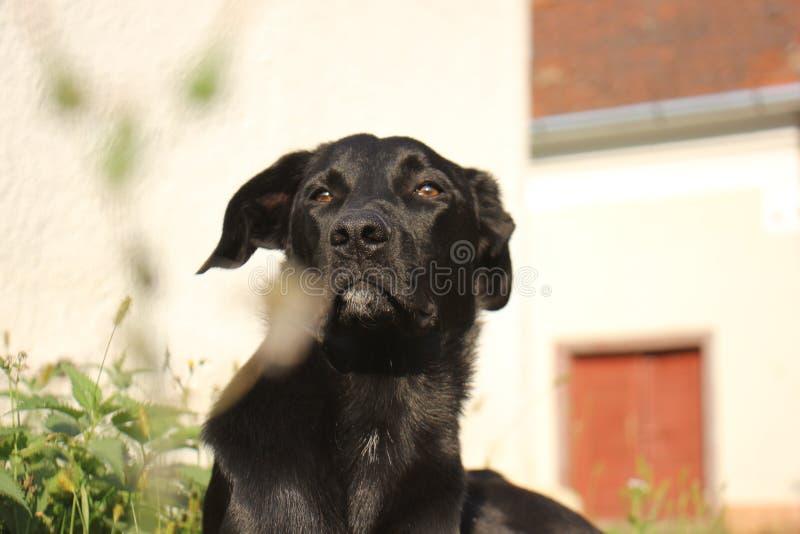 An autumn morning of a dog royalty free stock photos