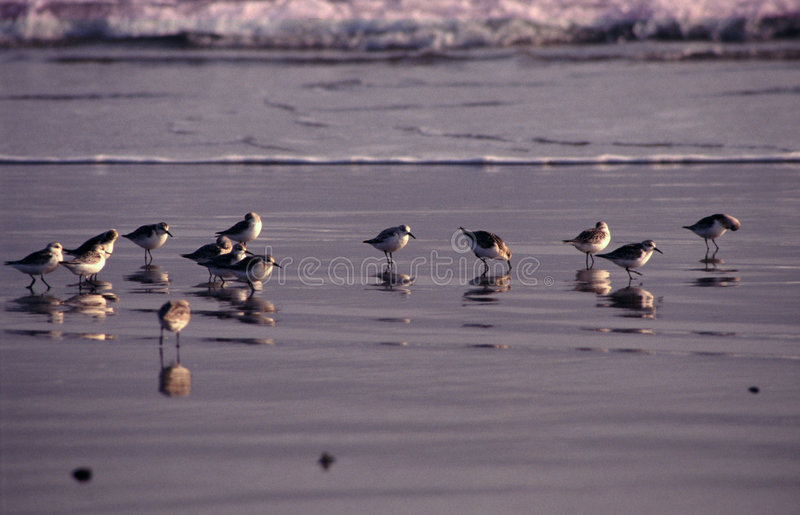 Download This is our world stock image. Image of gang, flock, together - 2186103
