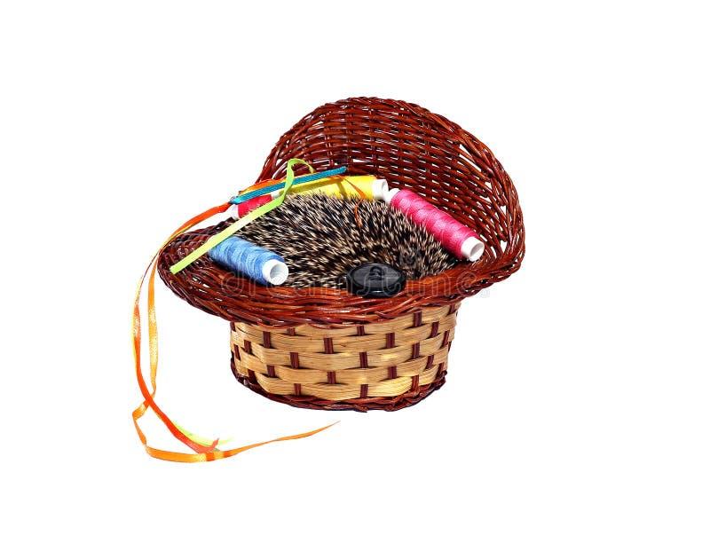 Ouriço pequeno da floresta em uma cesta isolada imagens de stock