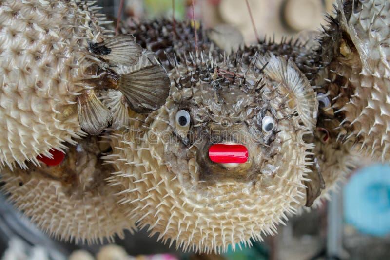 Ouriço redondo dos peixes fotos de stock royalty free