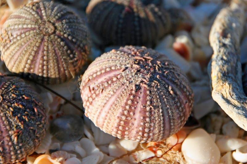Ouriços-do-mar