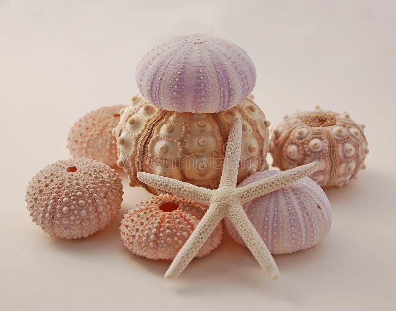 Ouriços-do-mar e starfish fotografia de stock royalty free