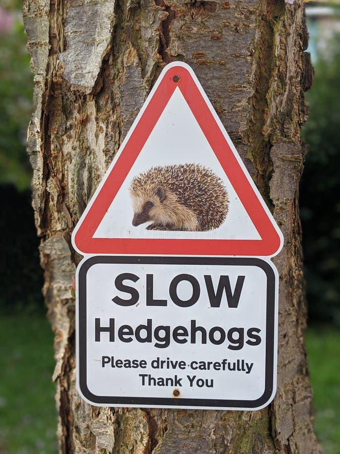 Ouriços lentos que cruzam o sinal imagem de stock