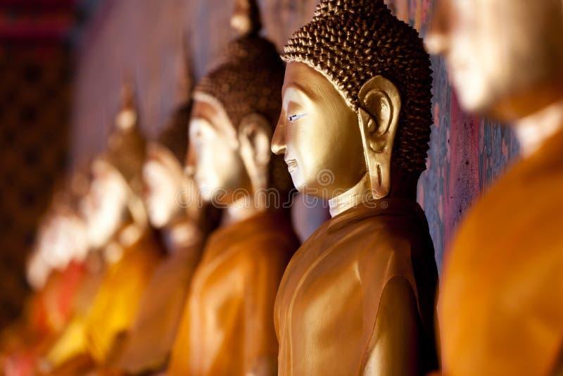 Ouro alinhado buddha fotografia de stock