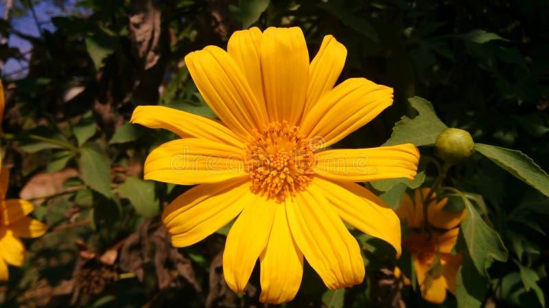 Ouro da flor para Tailândia imagem de stock royalty free