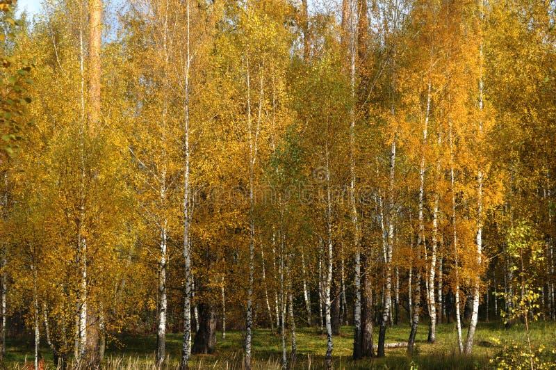 Ouro de Rússia foto de stock royalty free