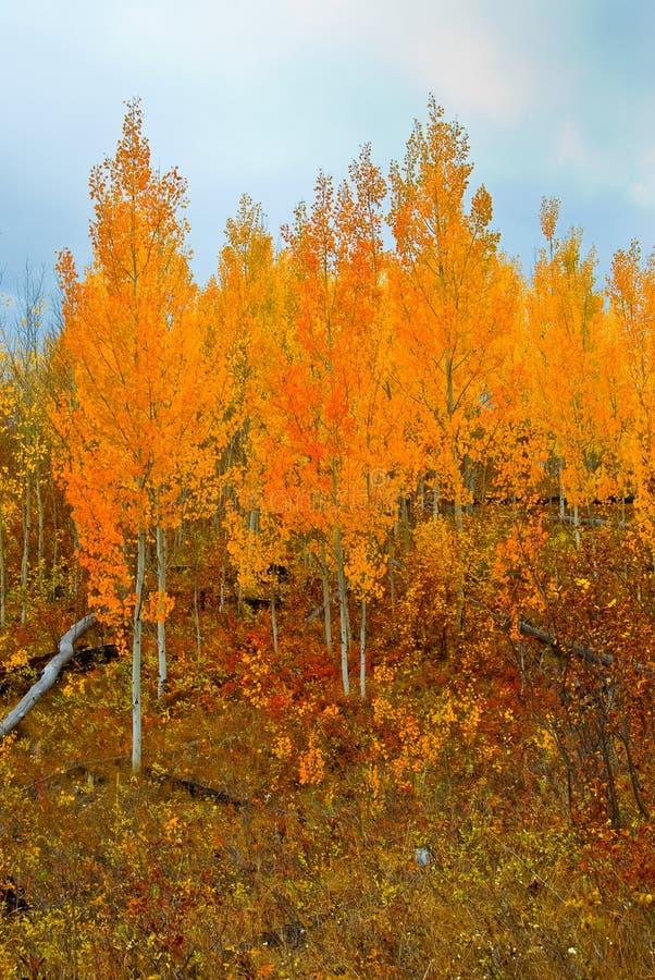 Ouro do outono fotos de stock royalty free