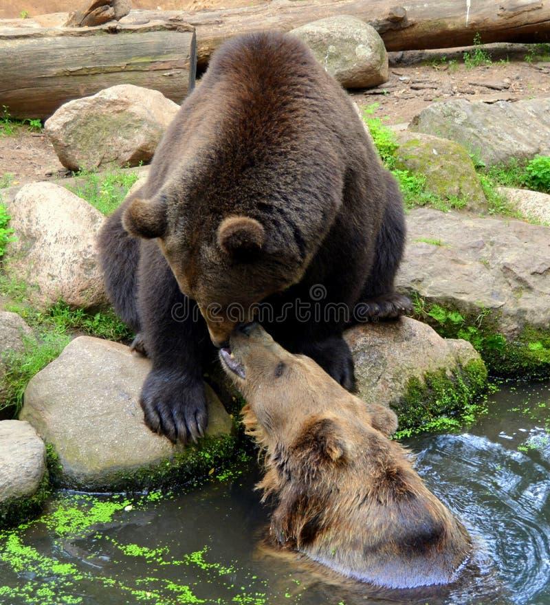 ours photo libre de droits