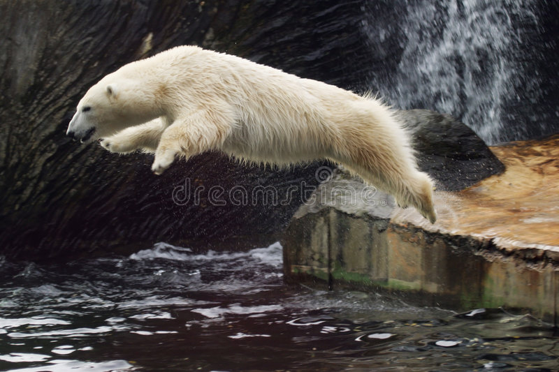 Ours blanc image stock