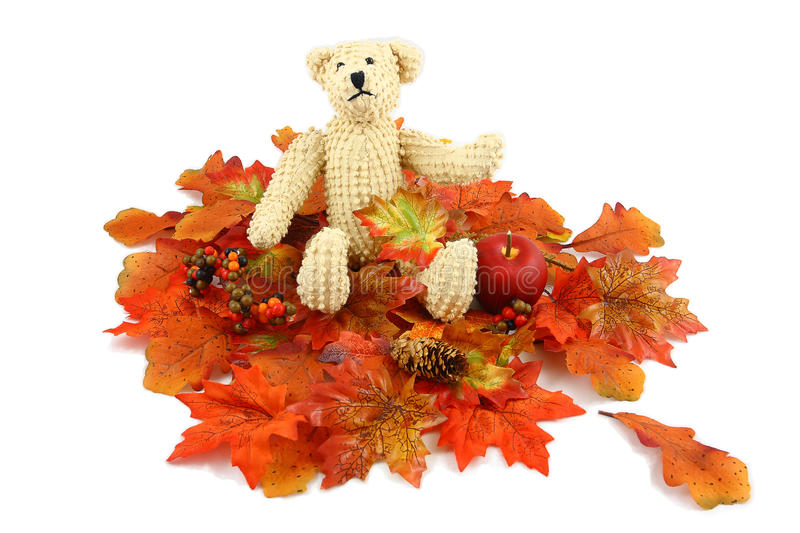 Ours d'automne photo stock
