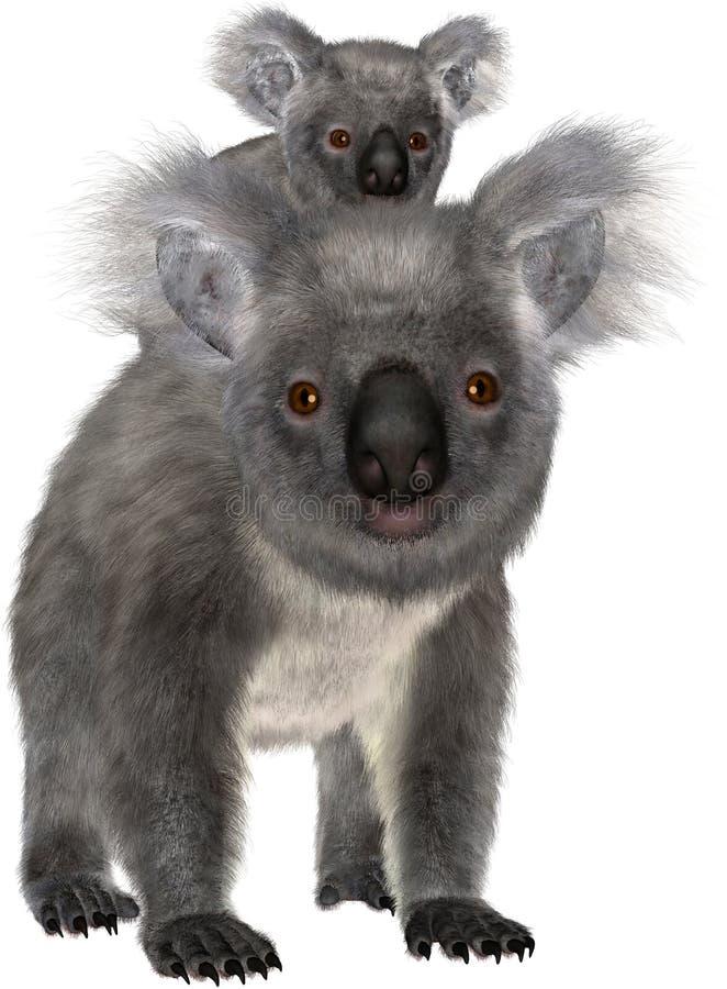 Ours de koala, bébé Joey, d'isolement photos stock