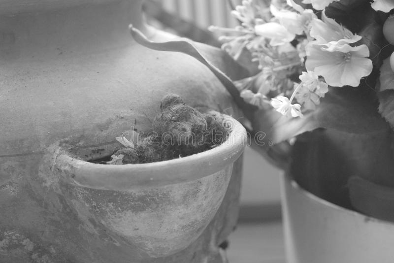 Ours de nounours et une cruche photos libres de droits