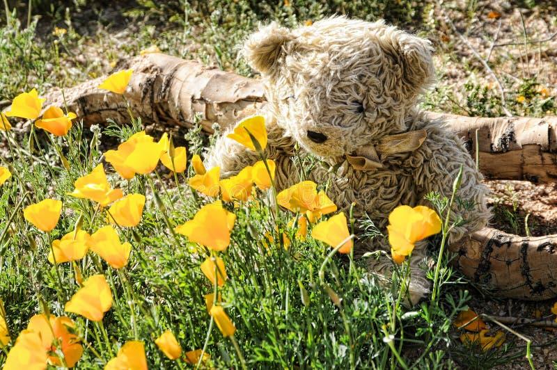 Ours de nounours sentant les fleurs sauvages image stock