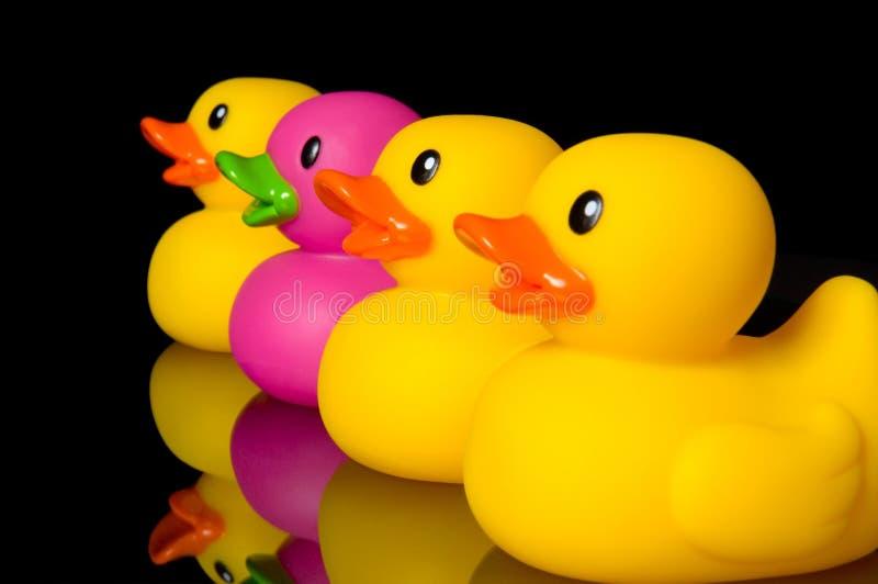 Ouse ser diferente - os patos de borracha no preto imagem de stock royalty free